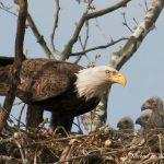 The-eagles-have-landed